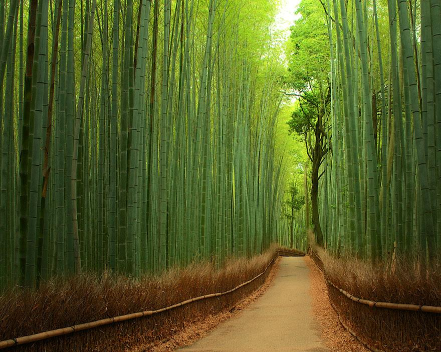 8. Bamboo Forest - Japan