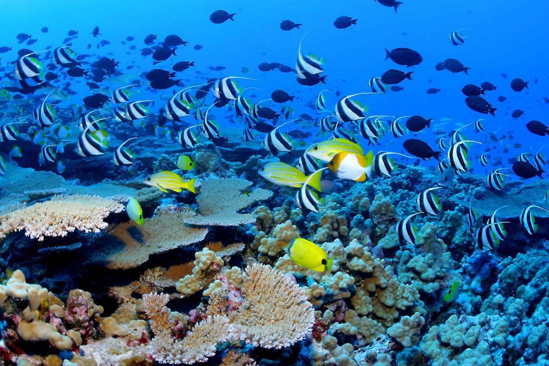 4 idées de destinations pour les amateurs plongée
