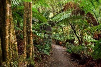 La foret pluvial du Queensland - Australie