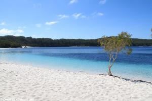 Le lac Mac Kenzy à Fraser Island- Australie