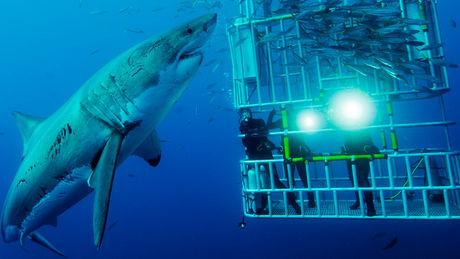 Nager avec Requin Australie