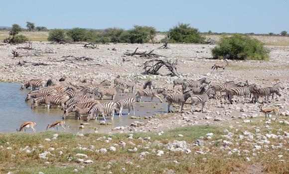 Namibie, en bordure de l'Océan Atlantique