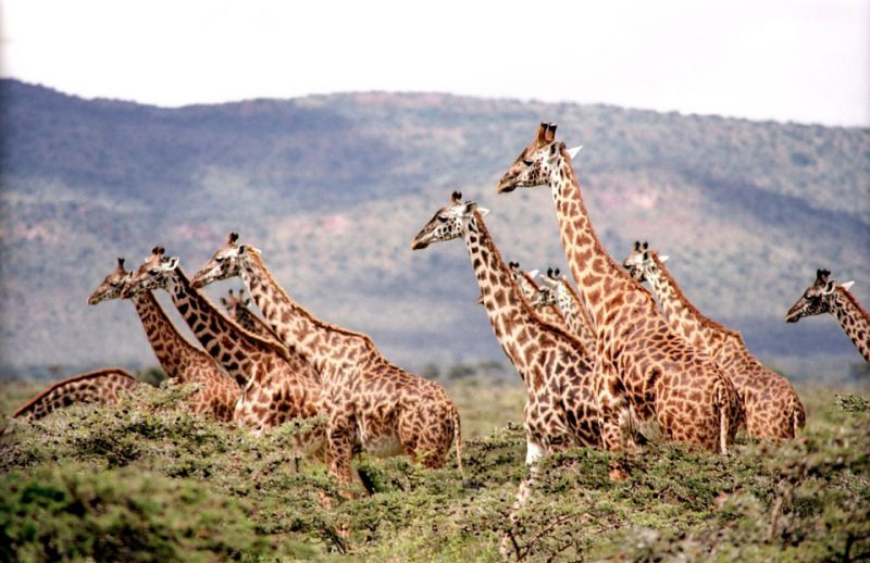 Où faire un safari en Afrique ?