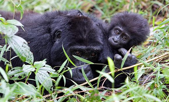 Ouganda, dans l'Afrique des Grands Lacs