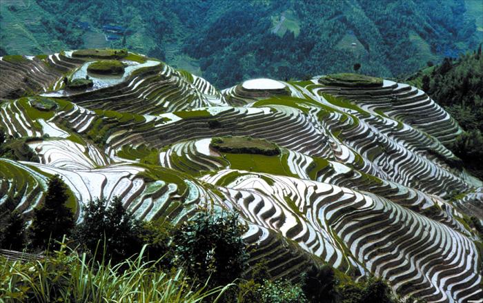 Les rizières en terrasse du dos du dragon à Longsheng