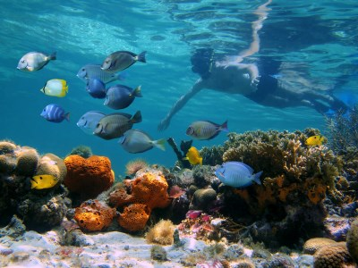 plongée sous marine costa rica
