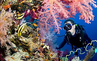 plongées sous-marines madagascar