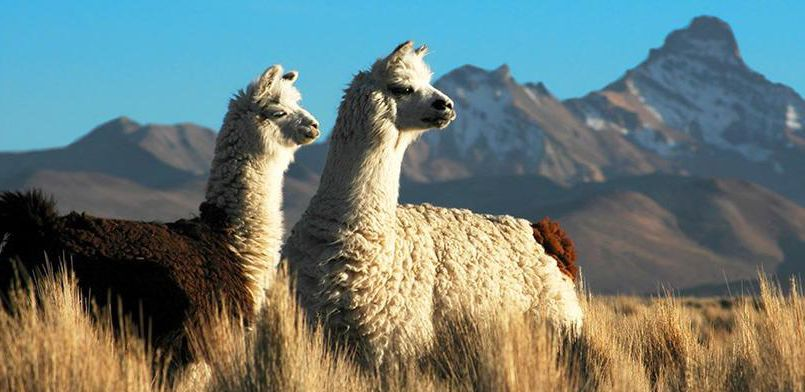 voyager-en-bolivie