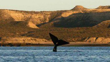 La péninsule Valdés - le safari marin