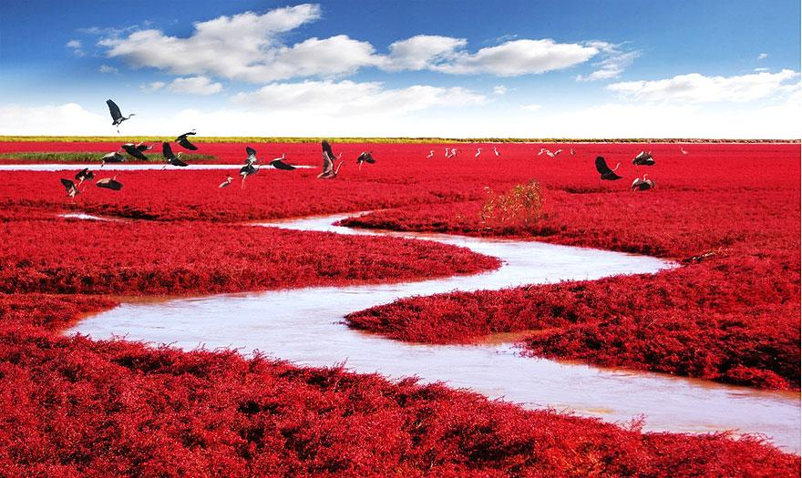 7. Red Beach - Panjin, China