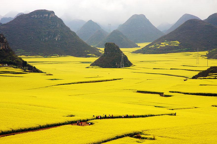 10. Canola Flower Fields - China