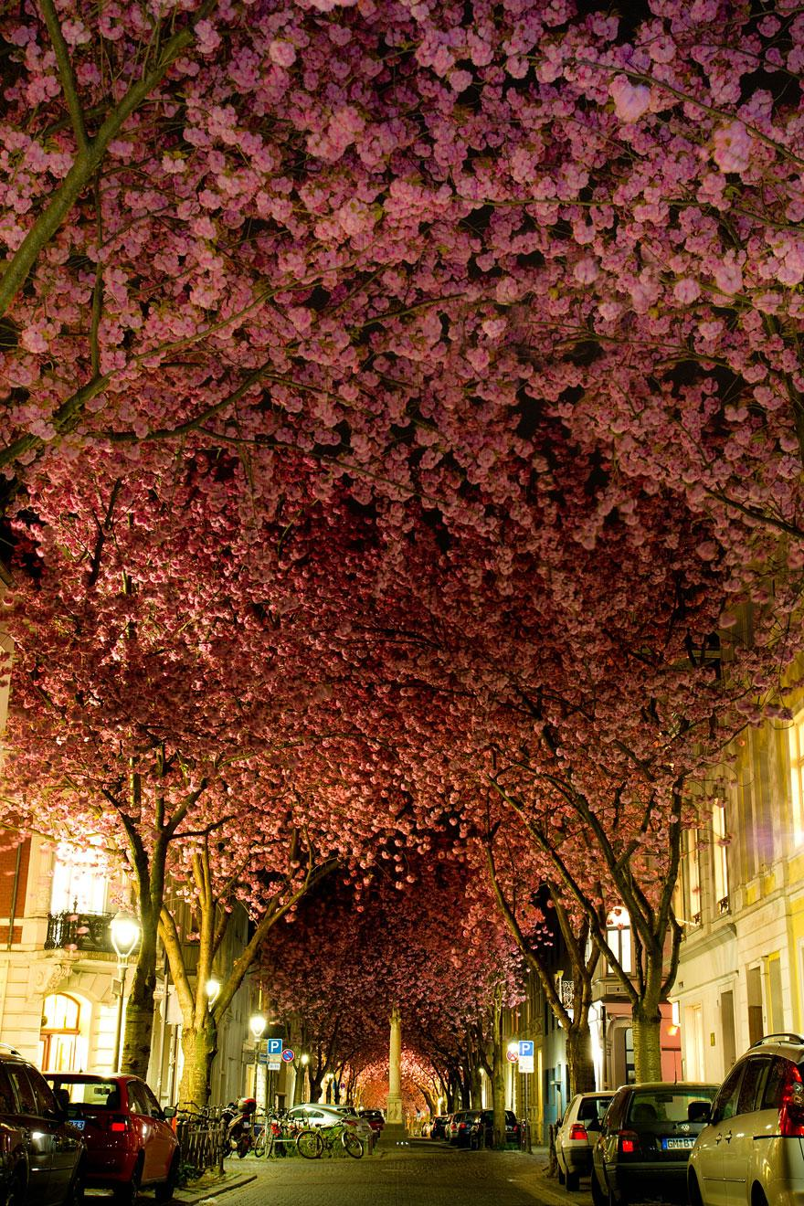 4. Street in Bonn, Germany