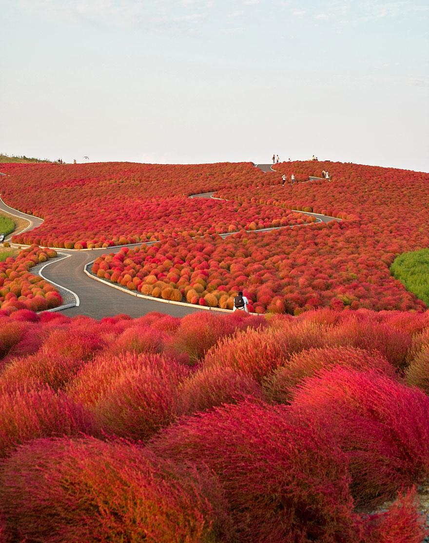 13. Hitachi Seaside Park - Japan