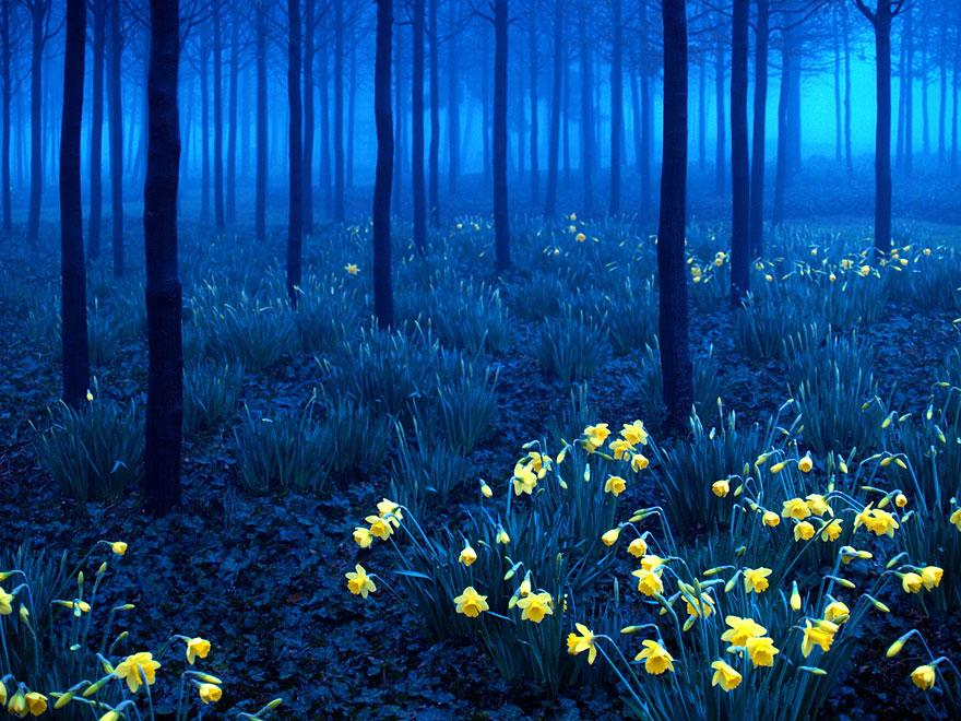 16. Black Forest - Germany