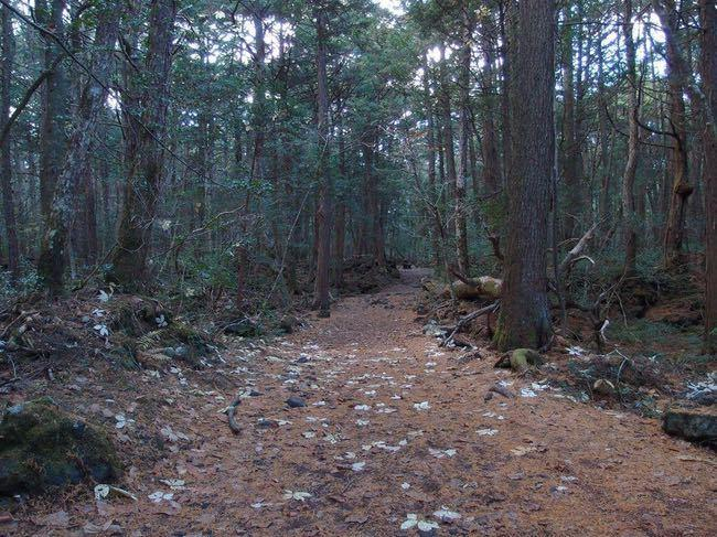 aokigahara-forest-japan-min