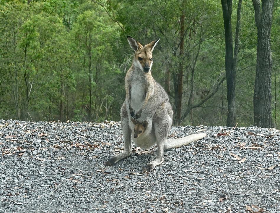 5 lieux incontournables pour découvrir des animaux en Australie