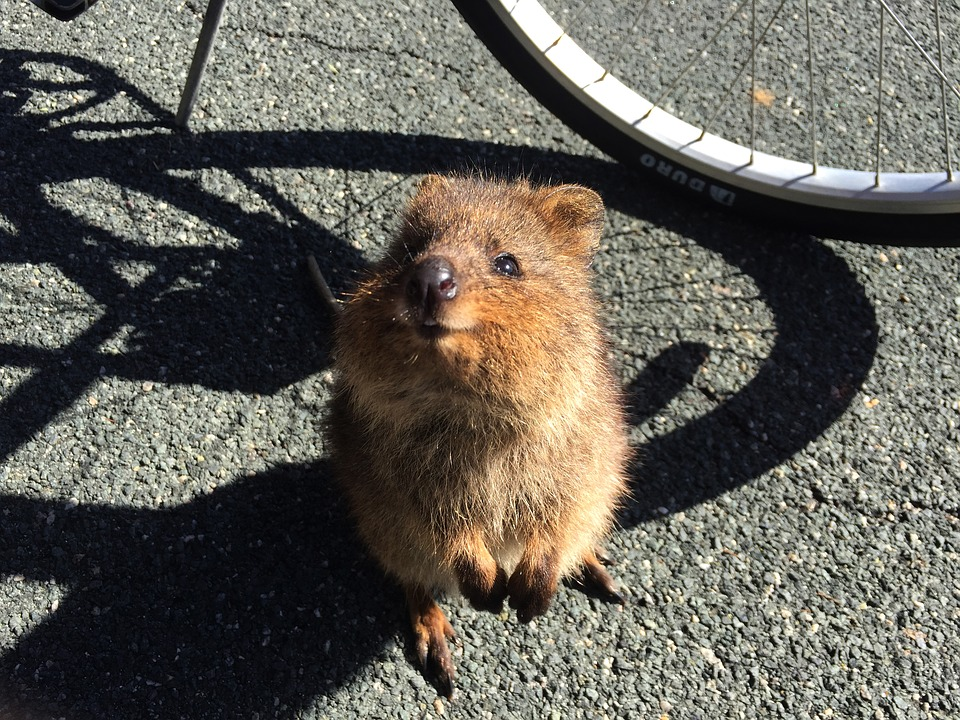 Animaux en liberté - Australie