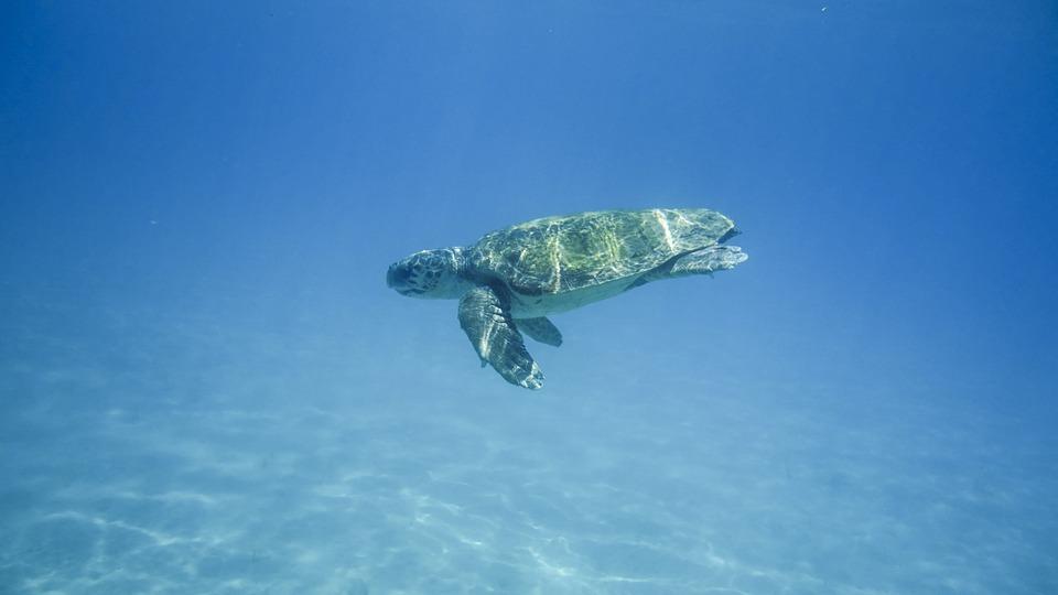 La Grande Barrière de Corail - poissons, coraux, tortues, baleines et requins