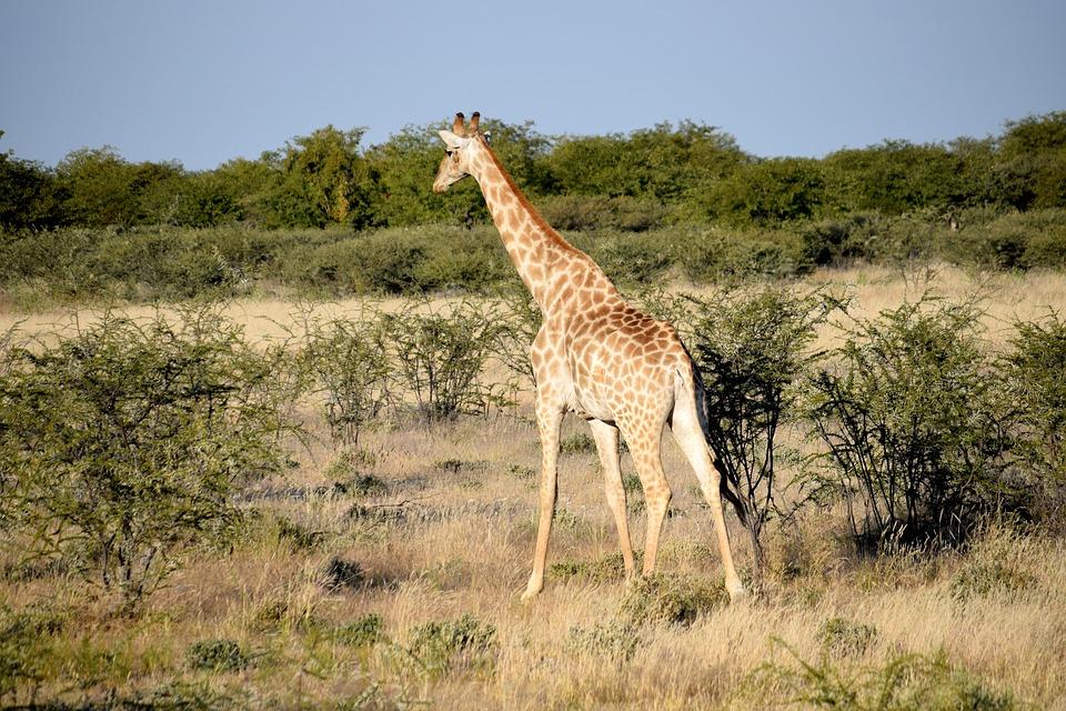 Nos conseils pour un Voyage en Afrique