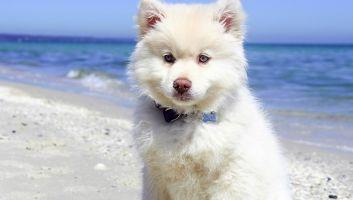 Comment occuper le chien pendant votre semaine de vacances