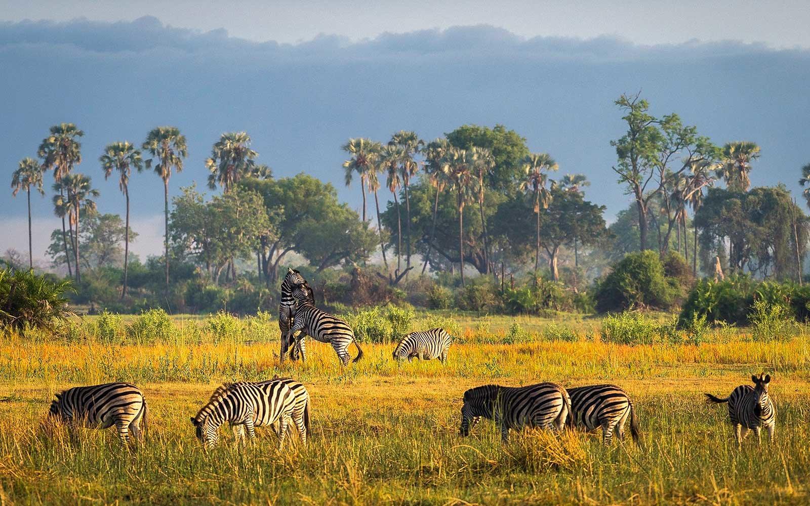 8 endroits où faire un safari en Afrique