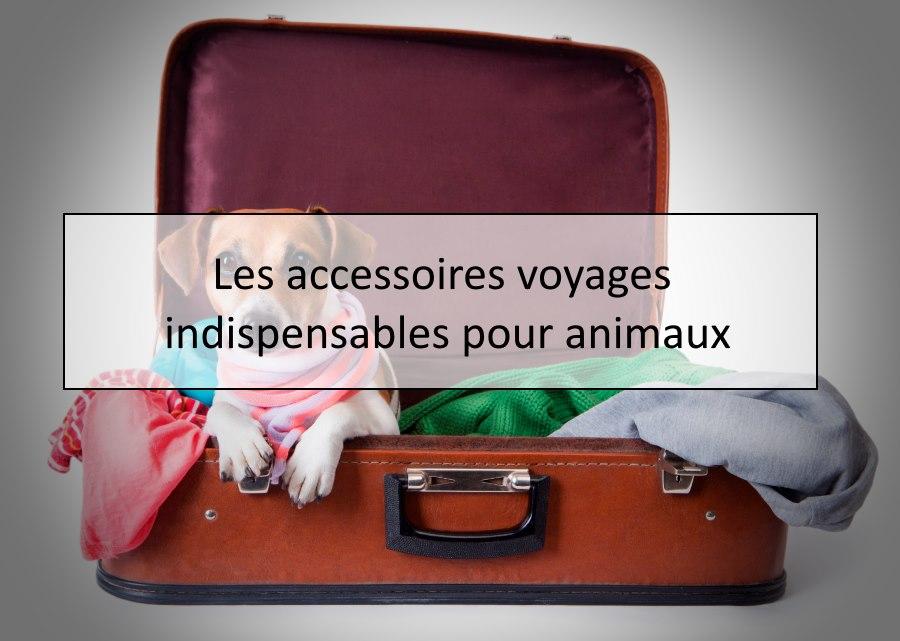 Les accessoires voyages indispensables pour animaux
