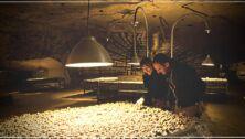 Cave Troglodyte Saumur